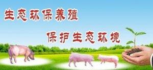 最近总说环保养猪,来看看各地养猪人都怎么说……