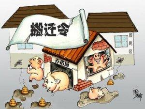 山东冠县贾镇:有300多头猪的养猪场搬了