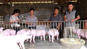 福建:东山全力推进生猪养殖面源污染防治工作