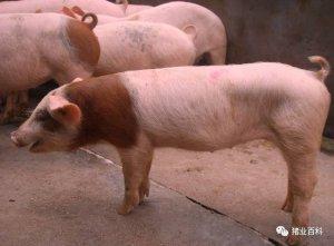 死猪、反弹……治疗呼吸道为啥屡战屡败!?
