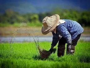 【关注】明年起,这三类农民将被禁止领取农业补贴