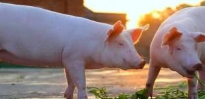 畜禽粪污机械处理,绿色养殖节本增效