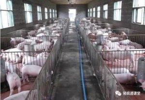 猪场常备哪些药?养殖户一定要知道!