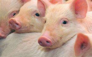 又一个20万头生猪,落户四川达州万源