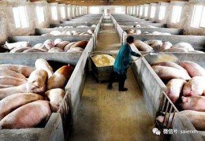 猪场消毒看上去干净远远不够