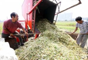发酵饲料为何迅速深入养殖场?