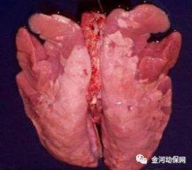 刘德旺--怎样通过肺部病变判断是什么病?