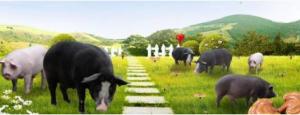 我国首个农场动物福利行业标准通过审查