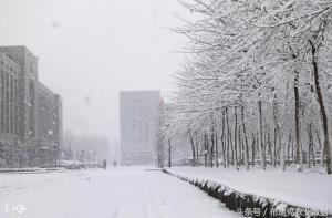 东北局部将迎暴雪,玉米可适时分批出售!