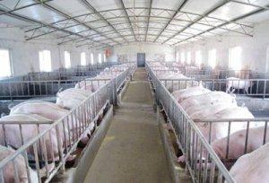 正大7亿元生猪项目开建、新希望前三季度