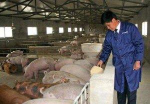 无证养猪场被关停整改!养猪人得注意了!