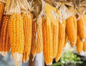 玉米价格持续走强,后市如何?2018玉米市场如何演绎?