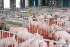 如何正确控制养猪场的温度?
