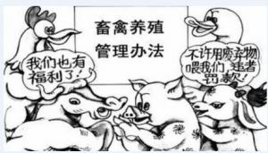 广州出台畜禽养殖管理办法 将进一步规范养殖行为