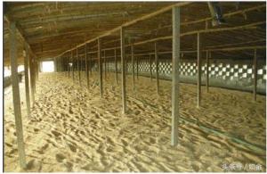 异位发酵床和干撒式发酵床哪个更节省成本