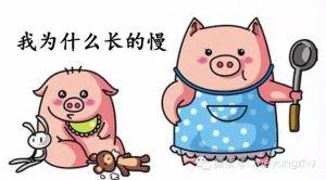 育肥猪长得慢这8个原