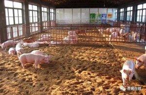 大老板们用的养猪办法,你符合几点?