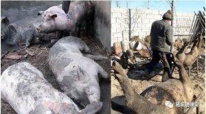 初冬如何做好养猪场的防火安全?