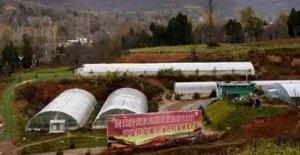 新奇,猪埋地下养能长300多斤,还能环保通过!