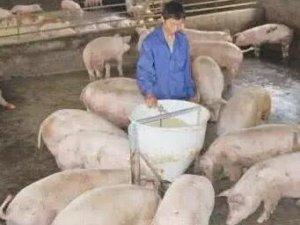 猪价继续维持稳定 市场供需僵持局面延续