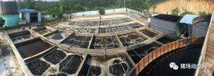 副总理汪洋点赞的猪场,污水处理究竟是如何做的?