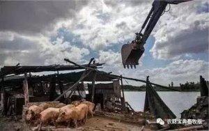 湖北清拆养殖场4574个!广西、上海、福建环保拆猪场仍在进行……