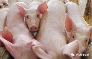 12月猪价或有大转机?看看是否有道理?