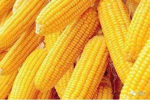 玉米价格还有上涨机会吗?玉米市场估值偏