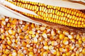 未来玉米价格会否出现两极分化?