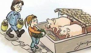 这个小工具,轻松解决猪便秘,自己动手就