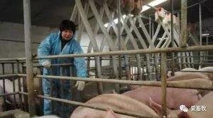 环保部门:村民养猪出栏超500头必须环评