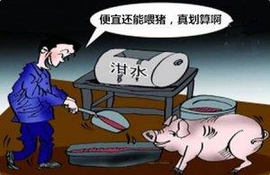 泔水养猪真的能降低养殖成本吗?