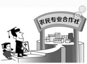 """平度:合作社成为养殖户贴心""""娘家"""""""