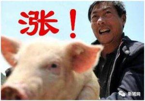 猪价直逼8元但饲料涨势更猛?更悲催的是这些地区又要拆猪场了......