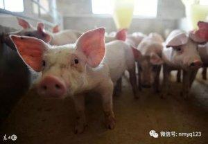 生猪日评:猪价南涨北落 短期走势现分歧