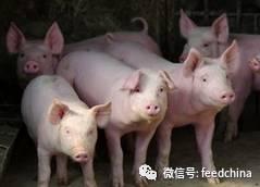因为环保,猪价还能涨多久?有挑战也有机会!