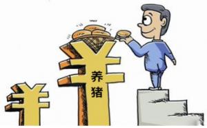 """陕西合阳县:""""发财猪""""打开致富路"""