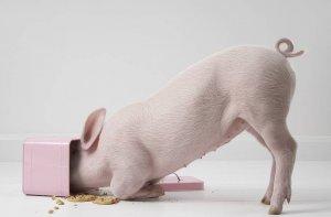 大猪场系统控制猪病毒性腹泻的方法,真的