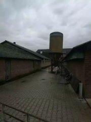 这家PSY达31头的荷兰猪场竟然从不清粪,而且只需2人管理!