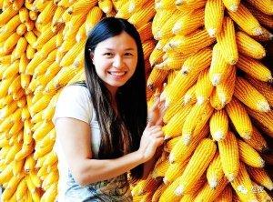 玉米市场热火朝天,玉米价格强势运行!农