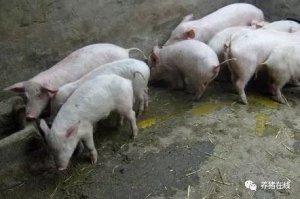 仔猪产房腹泻的预防及控制方法