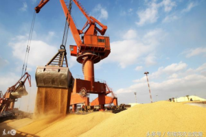 东北玉米价格继续上调