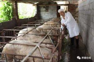 造成母猪死胎增多及难产的原因和预防