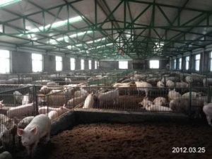 老刘养猪培训 环境――湿度大小无所谓吗?