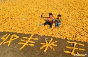 玉米价格要步入1元时代吗?玉米价格普涨