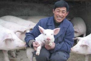 """""""若要猪无病,必须要四净"""",养猪户们知"""