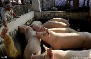 养猪几种错误,你犯过吗?