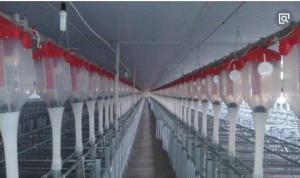 这个猪场花160万买智能喂料设备,每月省6吨饲料