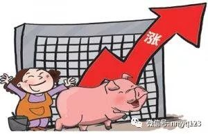 生猪日评:猪价全线飘红 新年形势喜人