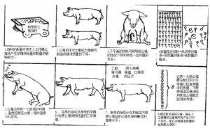 规模猪场几十年的经验――图文并茂的告诉